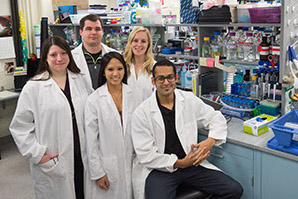 Researchers Confirm Molecule's Role in Kidney Formation