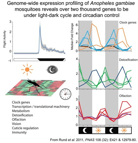Rund Et Al 2011 Summary Figure Website Duffield Lab