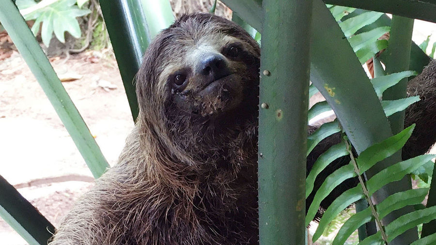 Sloth Duffield July 16 2020